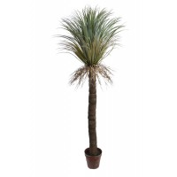 Wild Yucca Palmboon in pot 152 cm