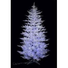 Aurora Ice Cedar Glittery