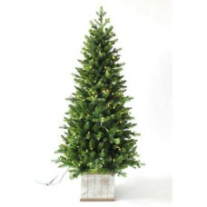 Norfolk kerstboom met 200 LEDS